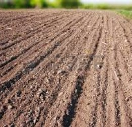 """ATK """"Lepoglava"""" traži dodatne parcele i partnere za uzgoj buča"""