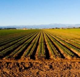 ZATVORENO: Javni poziv sa zainteresiranom javnošću u postupku donošenja u postupku donošenja Programa potpore poljoprivredi i ruralnom razvoju za 2018. godinu