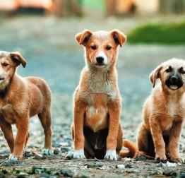 OTVORENO Javni poziv za savjetovanje sa zainteresiranom javnošću u postupku donošenja Odluke o uvjetima i načinu držanja kućnih ljubimaca i načinu postupanja s napuštenim i izgubljenim životinjama te divljim životinjama