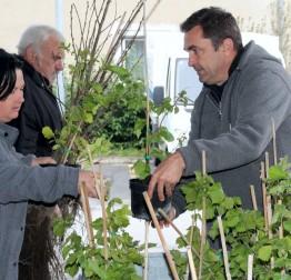 Podijeljeno oko 1000 sadnica lješnjaka, lipe i pitomog kestena