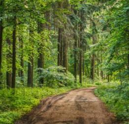 ZATVORENO: Javno savjetovanje sa zaintereseiranom javnošću u postupku donošenja Programa utroška sredstva šumskog doprinosa za 2020. godinu