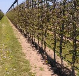 JAVNI POZIV za dodjelu potpora u poljoprivredi za 2021. godinu