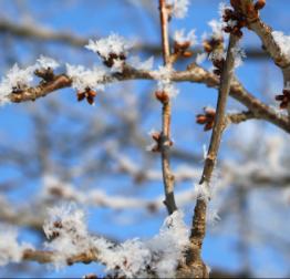 Proglašena prirodna nepogoda od mraza za područje grada Lepoglave