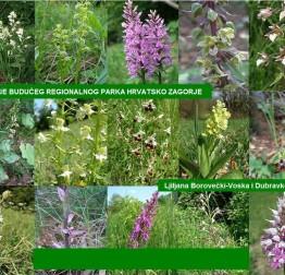 Najava: Orhideje budućeg Regionalnog parka Hrvatsko zagorje